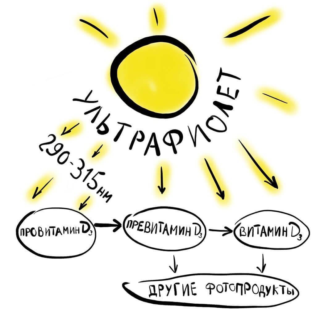 преобразование ультрафиолета в витамин Д